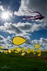DIEPPE - Festival International de cerf-volant 3